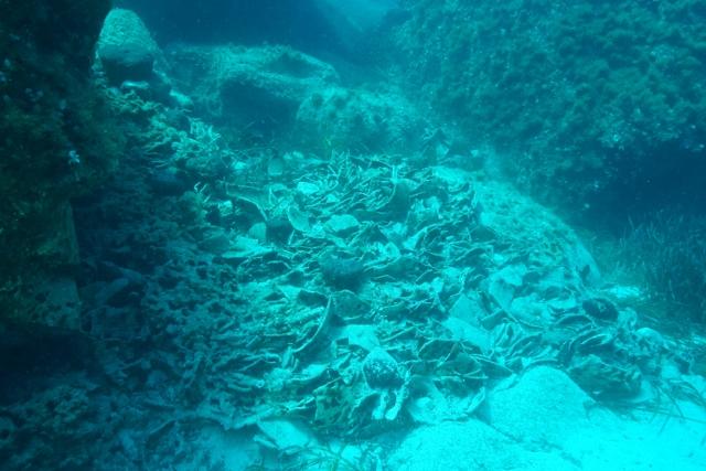 Fragments d'amphores concrétionnés au sud de Délos ©Ekaterini Tagonidou