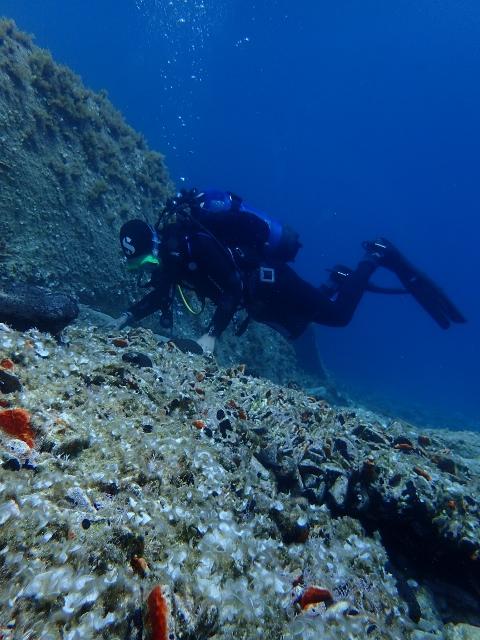 Plongeur observant des amphores repérées au sud de Délos ©Nathalie Gassiolle